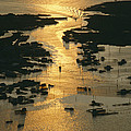 Aerial Shot, Tangier Island, Chesapeake by Skip Brown