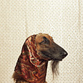 Afghan Hound Wearing Scarf by Dtp