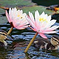Afloat Among Lillies by Fraida Gutovich