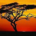 Africa by Robert Anderson