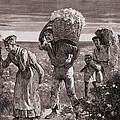 African Americans Leaving A Cotton by Everett
