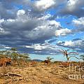 African Elephant by Amir Paz