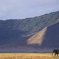 African Elephant In Ngorongoro Crater by Suzi Eszterhas