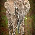 African Elephant by Rudy Umans
