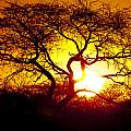 African Tree by Andy Bitterer