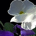 African Violets by Dale   Ford
