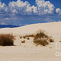 Afternoon At White Sands National Monument by Roena King