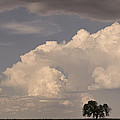 Afternoon Thunderstorm Building East Boulder County Co Plains by James BO  Insogna