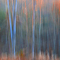 Afternoon Trees by Ron Jones