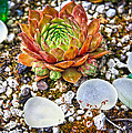Agates And Cactus by Steve McKinzie