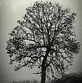Age Old Tree by Steve McKinzie