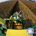 Agricultural Engineer by Photo Researchers