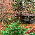 Ahwahnee Cabin Light by Heidi Smith