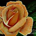Airbrushed Coral Rose by Barbara Griffin