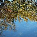Airplane Reflections by LeeAnn McLaneGoetz McLaneGoetzStudioLLCcom