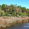 Alabama Bayou In Autumn by Carol Groenen