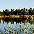 Alafia River State Park by Herman Boodoo