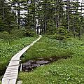 Alaska Meadow Trail by Terry Cotton