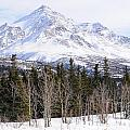 Alaska Range Peak by Gary Whitton