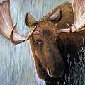Alaskan Bull Moose by Dee Carpenter