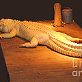 Albino Alligator by DiDi Higginbotham
