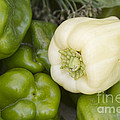 Albino Bullnose Pepper by James BO  Insogna