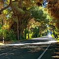 Albufera Road To El Palmar. Valencia. Spain by Juan Carlos Ferro Duque