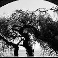 Alcatraz Tree by Ty Helbach