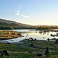 Alder Lake Wa At Sunset by Rob Green