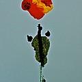 Alein Flower by Gloria Warren