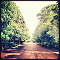 #alexandrapalace #alexandrapark #park by Neil Menday