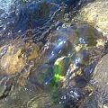 Algae  by Staci Black