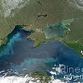 Algal Blooms In The Black Sea by NASA / Science Source