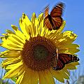 All A Flutter by Brenda Giasson