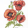 All About Poppies by Karen Risbeck