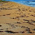 All Beach by Skip Willits