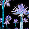 All The Palms by Trish Tritz