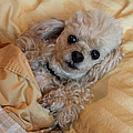 All Tucked In by Diana Haronis