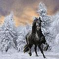 Allegro Coming Home by Tom Schmidt