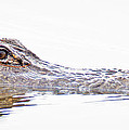 Alligator Dawn by Jim DeLillo