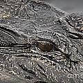 Alligator Eye by Danuta Bennett
