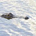 Alligator With Sky Reflections by Bill Swindaman