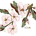 Almond Branch With Flowers And Leaves by Anne Norskog