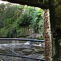 Almond River Step-door  by Jose Luis Cezon Garcia