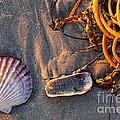 Along The Beach Texas by Matt Suess