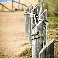 Along The Trail by Sherri Powell