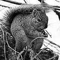 Alpha Squirrel  by Jenna Monroe