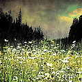 Alpine Meadow by Arne Hansen