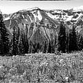 Alpine Meadow Viii At Mount Rainier by David Patterson