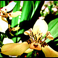 Always Orchids by Maria Tejada Ljungbeck